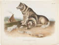 Antiques:Posters & Prints, John James Audubon (1785-1851). Canis Familiaris - Plate CXIII(Bowen Edition).. Lithograph of the Esquimaux Dog, hand-col...
