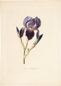 Antiques:Posters & Prints, Antoine Chazal (1793-1854). Two Flower Prints: Iris d'Allemagne. [and:] Oreille d'Ours.... (Total: 2 Items)