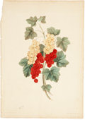 Antiques:Posters & Prints, Two Botanical Prints, One of Grapes by George Brookshaw, and one ofStrawberries by John Edwards. Both in generally very goo... (Total:2 Items)