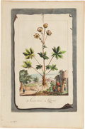 Antiques:Posters & Prints, Abraham Munting (1626-1683). Three Botanical Prints. Three handcolored copper engravings on laid paper from Munting's Phy...(Total: 3 Items)
