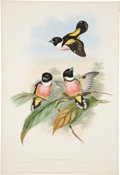 Antiques:Posters & Prints, John Gould (1804-1881). Two Prints: Eurylaimus Ochromalus. [and:]Cymbirhynchus Affinis.. Two charming hand-colored li... (Total: 2Items)