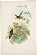 Antiques:Posters & Prints, John Gould (1804-1881). Two Prints: Panoplites Flavescens. [and:]Florisuga Ater.. A pair of beautiful hand-colored li... (Total: 2Items)