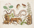 Antiques:Posters & Prints, Unattributed. Print Featuring Marsupials, Snake, Bird, andBotanicals.. Lively and charming hand-colored etching with engr...