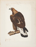 Antiques:Posters & Prints, Prideaux John Selby (1788-1867). Golden Eagle, Young - Plate II.. Hand-colored engraving from Selby's Illustrations of B...