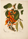 Antiques:Posters & Prints, Berthe Hoola van Nooten. Two Botanical Prints. Twochromolithographs, finished by hand, from van Nooten's Fleurs,Fruits e... (Total: 2 Items)