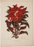 Antiques:Posters & Prints, Berthe Hoola van Nooten. Two Botanical Prints. Two chromolithographs, finished by hand, from van Nooten's Fleurs, Fruits e... (Total: 2 Items)