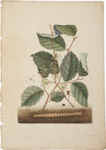 Antiques:Posters & Prints, Mark Catesby. Two Prints: Centipede. [and:] Green Turtle. Twohand-colored copper engravings from The Natural History ...(Total: 2 Items)
