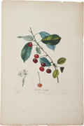 Antiques:Posters & Prints, Antoine Poiteau (1766-1854) and Pierre Jean François Turpin(1775-1840). Four Prints: Griotte à ratafia. [and:] Cerise à b...(Total: 4 Items)