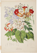 Antiques:Posters & Prints, Elizabeth Twining (1805-1889). Three Prints: Bignoniaceæ (TheTrumpet Flower Tribe). [and:] Leguminosæ (The Pea Tribe). ...(Total: 3 Items)
