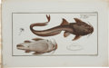 Antiques:Posters & Prints, Marcus Elieser Bloch. Two Fish Prints. Two hand-colored prints fromBloch's Allgemeine Naturgeschichte der Fische (Berli...(Total: 2 Items)