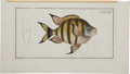Antiques:Posters & Prints, Marcus Elieser Bloch (1723-1799). Four Prints: Chætodon Marginatus. [and:] Chætodon Chirurgas. [and:] Chætodon Oce... (Total: 4 Items)