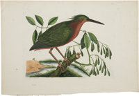 Mark Catesby (1682-1749). Two Prints: Ardea Stellaris minima/The Small Bittern. [and:] Ispida/The King-Fisher