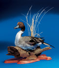 Zoology:Taxidermy, PINTAIL DRAKE ON DRIFTWOOD. ...