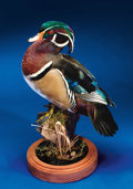 Zoology:Taxidermy, WOOD DUCK DRAKE. ...
