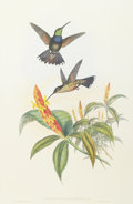 Mainstream Illustration, JOHN GOULD (British, 1804-1881). Blue Breast Hummingbird.Vintage Print. 23.5 x 15 in.. Signed in the plate, lower left...