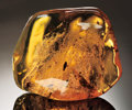 Amber, LARGE AMBER NUGGET WITH CLOUD OF INSECTS. ...