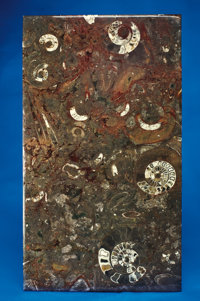 FOSSIL MARBLE TABLETOP