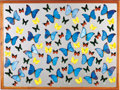 Zoology:Mounted Insects, LARGE ASSORTED BUTTERFLY DISPLAY. ...