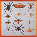 Zoology:Mounted Insects, CREEPY CRAWLY INSECT DISPLAY . ...