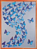 Zoology:Mounted Insects, LARGE BUTTERFLY SWARM DISPLAY . ...