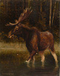 Fine Art - Painting, American:Antique  (Pre 1900), ALEXANDER POPE, JR. (American, 1849-1924). Moose. Oil on canvas. 20 x 16 inches (50.8 x 40.6 cm). Signed lower left: ...