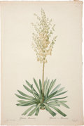 Books:Prints & Leaves, Pierre-Joseph Redouté. Two Prints: Yucca Filamentosa. [and:] YuccaFilamentosa (Detail). Two stipple engravings of the y... (Total: 2Items)
