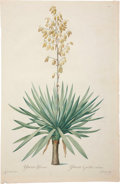 Antiques:Posters & Prints, Pierre-Joseph Redouté. Two Prints: Yucca Gloriosa. [and:] YuccaGloriosa (Detail). Two stipple engravings with hand-colo... (Total:2 Items)