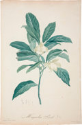 Antiques:Posters & Prints, Pierre-Joseph Redouté. Two Prints: Magnolia Pumila. [and:] MagnoliaMacrophylla. Two stipple engravings of magnolias. Bo... (Total: 2Items)