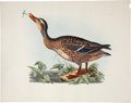 Antiques:Posters & Prints, Prideaux John Selby. Wild Duck - Plate L. Hand-colored engravingfrom the second edition of Selby's Illustrations of Briti...