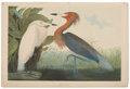 Antiques:Posters & Prints, John James Audubon (1785-1851). Reddish Egret - Plate 371 (Bien Edition)....