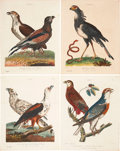 Antiques:Posters & Prints, George Edwards. Four Falcon Prints. Four hand-colored engravingsfrom Wilkes' Encyclopaedia Londinensis (London: 1796-18...(Total: 4 Items)