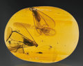 Amber, THREE FLYING ANTS IN AMBER. ...