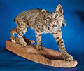 Zoology:Taxidermy, LARGE BOBCAT FULL-BODY MOUNT. ...