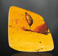 Amber, LARGE AMBER NUGGET WITH LARGE LEAF AND NUMEROUS INSECTS. ...