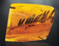 Amber, ACACIA FROND CAPTURED IN AMBER. ...