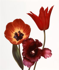 IRVING PENN (American, 1917-2009) Three tulips: Red Shine, Black Parrot, Gudoshnik, New York, 1967 D