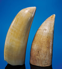 PAIR OF SPERM WHALE TEETH