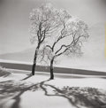 Photographs, ALFRED EISENSTAEDT (American, 1898-1995). Tree in the Snow, St. Moritz. Gelatin silver. 11-1/4 x 11 inches (28.6 x 27.9 ...
