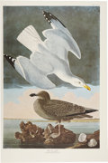 Antiques:Posters & Prints, John James Audubon. Two Prints: Herring Gull. [and:] Brasilian Caracara Eagle. (Amsterdam Edition). Photolithographs fro... (Total: 2 Items)
