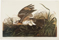 Antiques:Posters & Prints, John James Audubon. Three Prints: Winter Hawk. [and:] Cock of thePlains. [and:] Black-Throated Divers. (Amsterdam... (Total: 3Items)