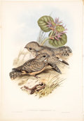 Antiques:Posters & Prints, John Gould. Three Prints: Caprimulgus Mahrattensis. [and:] Anthus Spinoletta. [and:] Merops Viridis. Three original... (Total: 3 Items)