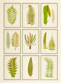 A SET OF THIRTY-SIX VICTORIAN COLOR LITHOGRAPHS IN FOUR FRAMES Edward Joseph Lowe (English, 1825-1900), circa 18