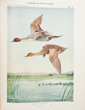 Books:First Editions, Elon Howard Eaton. Birds of New York. Albany: University ofthe State of New York, 1910, 1914. First edition. Tw... (Total: 2Items)