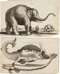 Antiques:Posters & Prints, Two 17th or 18th Century Copper Engraved Natural History Prints. [n.d., c. 1700]. 6.5 inches x 11 inches. Good.... (Total: 2 Items)