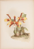 Books:Non-fiction, F. Sander. Reichenbachia. Orchids Illustrated and Described.Volume I. St. Albans: F. Sander & Co., 1888.. Vol...