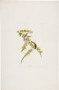 Antiques:Posters & Prints, John James Audubon (1785-1851). Pine Finch - Plate CLXXX (HavellEdition).. Hand-colored aquatint engraving by R. Havell f...