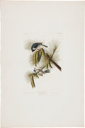 Antiques:Posters & Prints, John James Audubon (1785-1851). Crested Titmouse - Plate XXXIX (Havell Edition).. Hand-colored aquatint engraving by R. Ha...