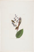 Antiques:Posters & Prints, John James Audubon (1785-1851). American Golden Crested Wren - Plate CLXXXIII (Havell Edition).. Hand-colored aquatint eng...