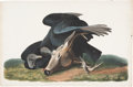 Antiques:Posters & Prints, John James Audubon (1785-1851). Black Vulture or Carrion Crow -Plate CVI (Havell Edition).. A startling hand-colored aqua...