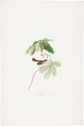 Antiques:Posters & Prints, John James Audubon (1785-1851). Swamp Sparrow - Plate LXIV (HavellEdition).. Hand-colored aquatint engraving by R. Havell...